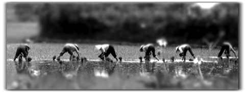 Photographie de Minh Spielmann.