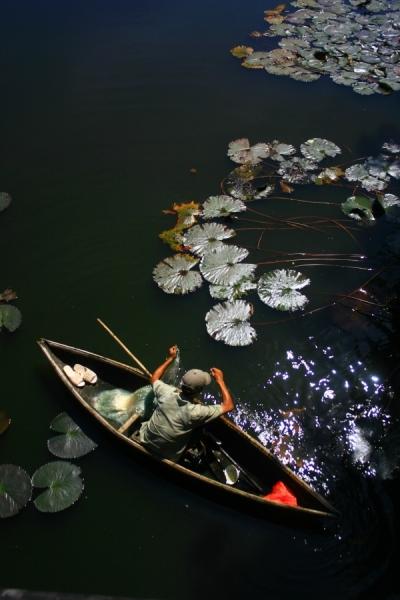 pêcheur dans les douves de la forteresse impériale ( Hué)[1]