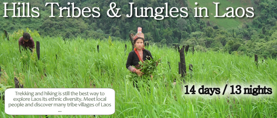 Hills Tribes & Jungles in Laos
