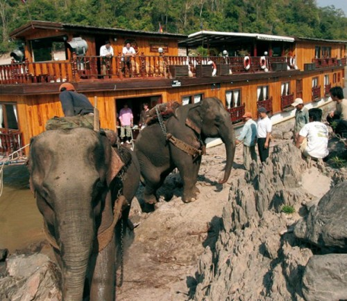 image_manager__img1134_530_20_mekong-elephants_in_action-laos